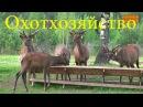 Охотхозяйство в Костромской области в HD.