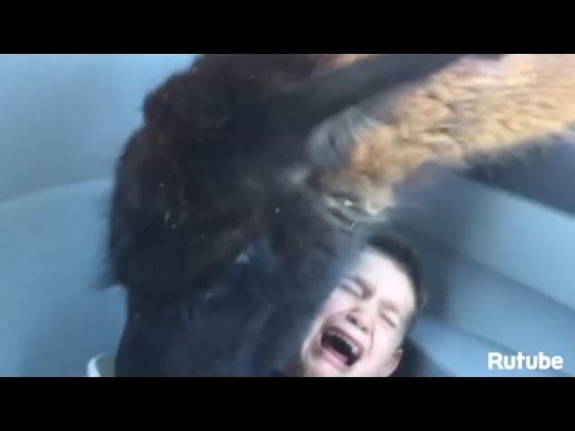 Топ-10 животных, которые атаковали людей