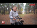 В парк Екатеринбурга - с электрошокером. Горожане спасаются от стаи собак