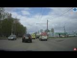Олени на дорогах Костромы-9. ДДД (10.05.17)