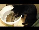 Как кот рыбачит
