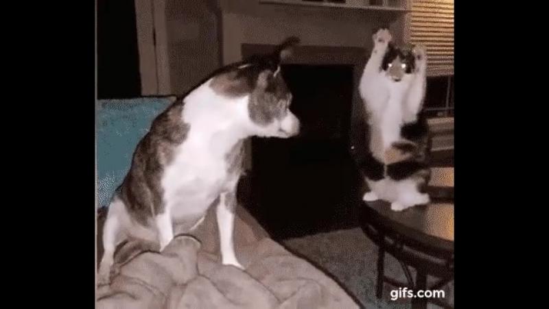 кот стриптезёрша