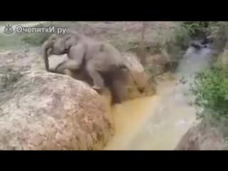 Слониха помогает своему сынишке