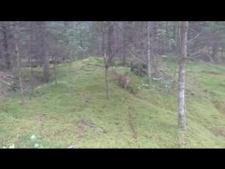 Басня- лисица и глупый мужик (6 sec)