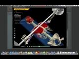 Наглядная биомеханика   Разбираем большую грудную мышцу