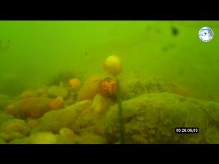 Ловля карпа на бойлы с пастой. Подводная съёмка, Часть 1
