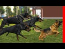 EXTREME TRAINED DISCIPLINED DOBERMAN PINSCHERS