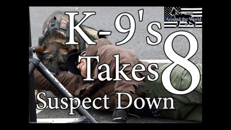 K-9's Takes Suspect Down 8 - Hooligans