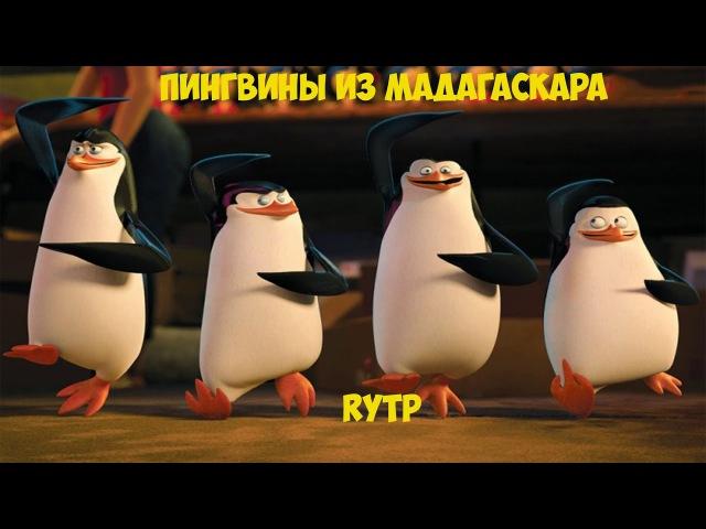 ПИНГВИНЫ ИЗ МАДАГАСКАРА |RYTP|ПУП