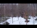 Эстонская гончая. Работа по белой тропе