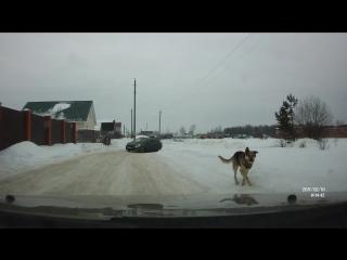 ВКонтакте видеозапись № 1263. FILE2922 - Собаки в городе.