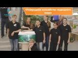 Мастер-класс Изумрудное волшебство подводного мира - оформление аквариума с бриллиантовыми тетрами