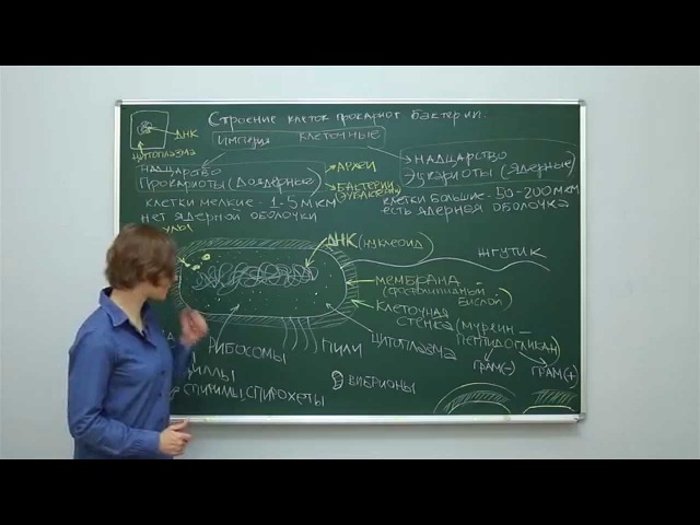 Биология. Цитология: Строение клеток прокариот. Бактерии. Центр онлайн-обучения «Фоксфорд»