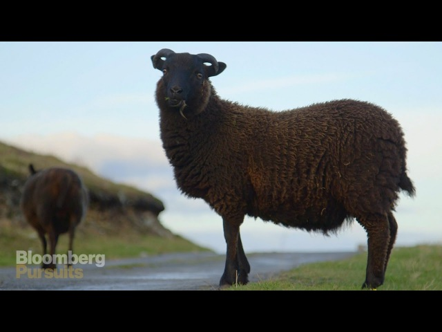 How the Worlds Softest Wool is Made