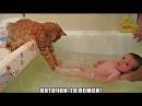 Подборка Смешная Супер Котята