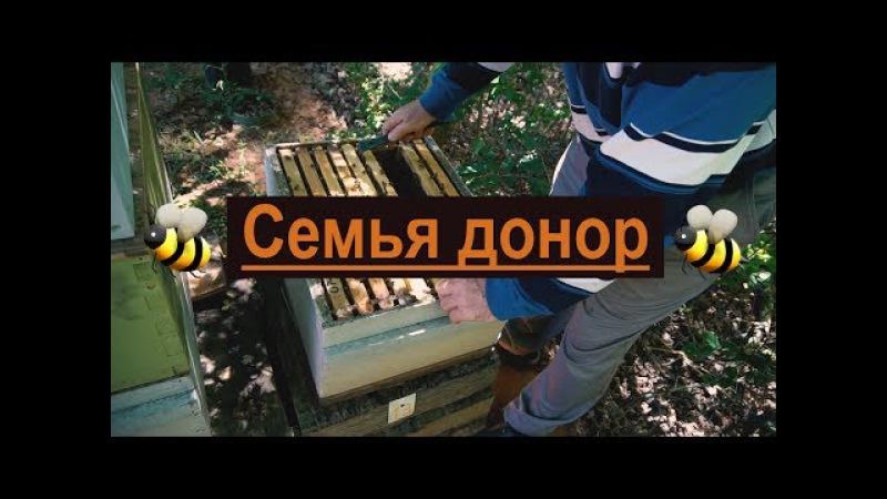 Пасека 31 Семья дающая золотые яйца - Моя пасека - Семья донор. Пчеловодство.