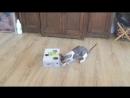 Игрушка коту