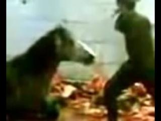 Убийство лошадей на мясо в России ...