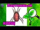 Вредитель комнатных растений паутинный клещ. Как бороться в домашних условиях?