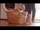 НОВИНКА! Рацион Hill's™ Science Plan™ Youthful Vitality™ для кошек старше 7 лет
