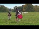НОВИНКА! Рацион Hill's™ Science Plan™ Youthful Vitality™ для собак старше 7 лет