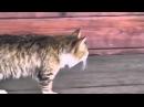 Шок!Королевский кот в Мухосранске