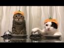 Смешной ролик про котов