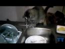 Funny cats washing the dishes, floor. Compilation. Кот моет пол, посуду. Смешная подпорка