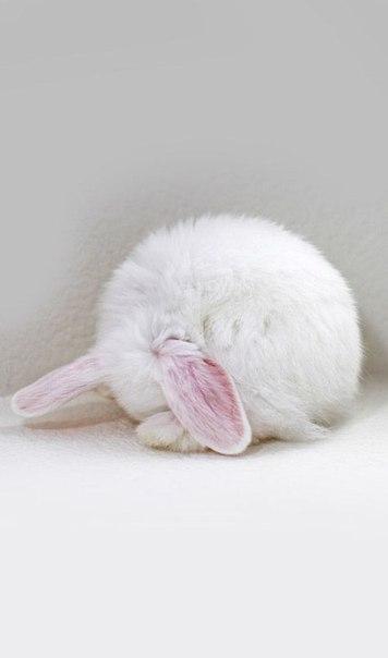 Когда-нибудь я заведу себе кролика