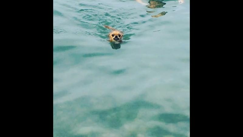 Лапоногий пловец 🐶🐾😎