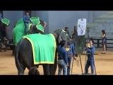 шоу слонов 2