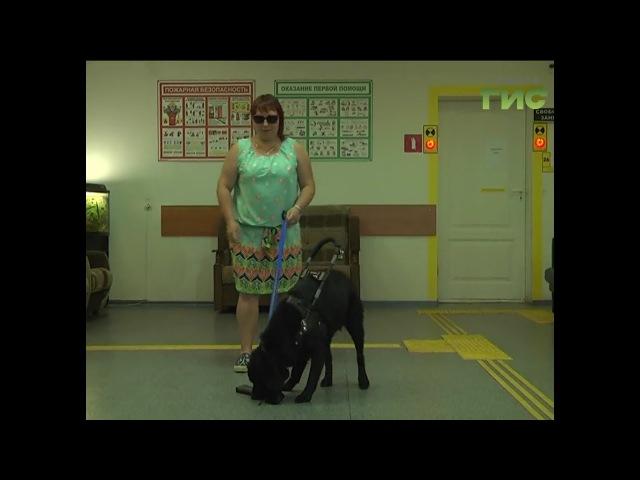 Самара стала первым городом,который познакомился с новым проектом С собакой вс ...