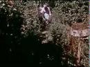 Sapovnela Song About a Flower 1959 tt0171717 Otar Iosseliani