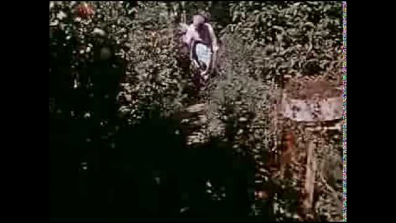 Sapovnela Song About a Flower 1959 Otar Iosseliani