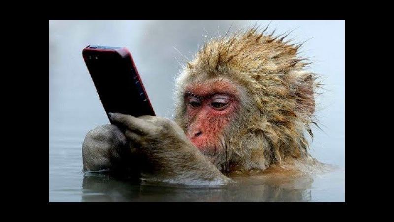 Смешные обезьяны Приколы про обезьян Funny monkeys 2 (Обезьяны едят арбуз, курят и плюю...