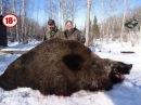 Охота на кабана CАМЫЕ БОЛЬШИЕ ДИКИЕ КАБАНЫ ТОP 15 ОГРОМНЫХ ТРОФЕЕВ Wild boar hunting