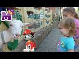 ЩЕНЯЧИЙ ПАТРУЛЬ Маршал и МАРИЯ в зоопарке Amusement Park and zoo Madagascar videos for kids