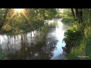 РелаксРека. Природа. Пение птиц. Журчание воды. Солнце в ветвях. Релакс. Медитация