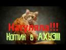 Нагуляла Котик в АХУЭ