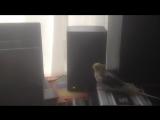 Мой попугай прикалывается от саб баса!))))