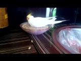 Мой попугай Оскар