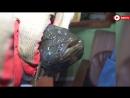 На Южном Урале поймали рыбу-мутанта
