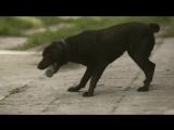 Мальчик и его пс Дак [720]