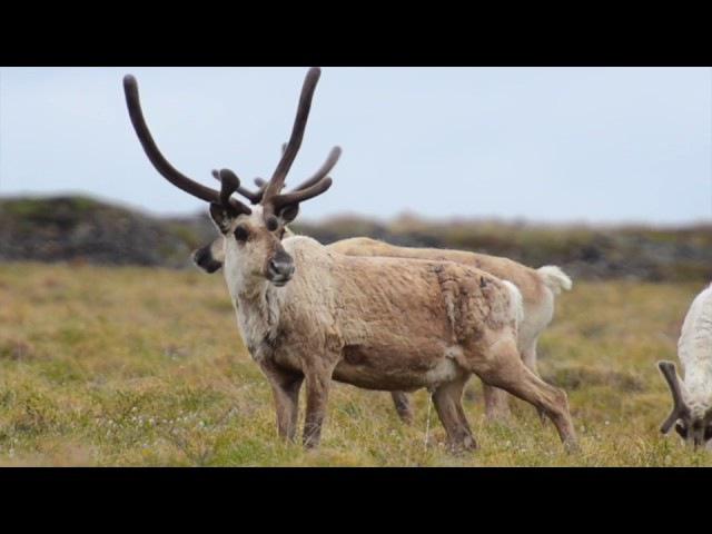 Nature of Chukotka | Природа Чукотки