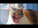 Самые смешные коты в мире! MEOW