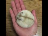 Хомячий шар