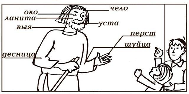 Устаревшие названия частей тела и производные от них