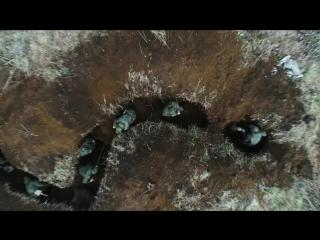 Часовой - Поисковый батальон. Выпуск от25.06.2017 г. 1 канал п. Мга