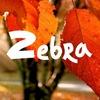 Танцевальный клуб ZEBRA | Миасс