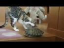 прикольные видео про животных!!
